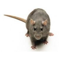 Средства от крыс, мышей